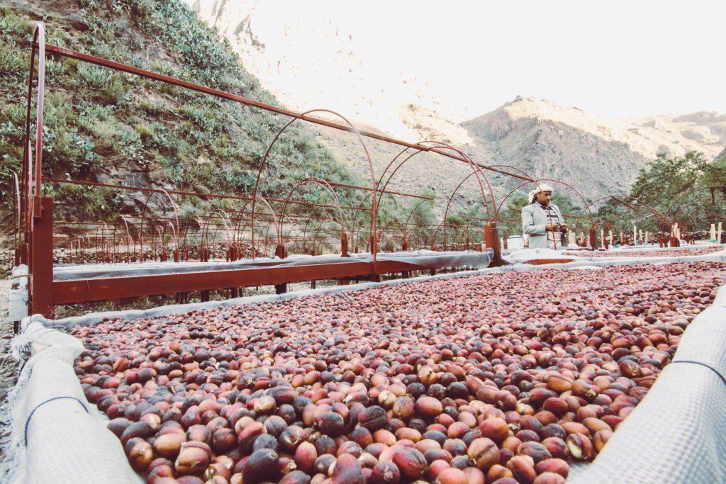 kávové bobule Tribes of Mokha